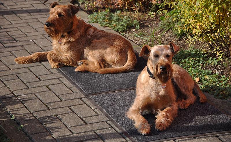Team - Kora und Theo sind die blutrünstigen Wachhunde vom eldoRADo Magdeburg